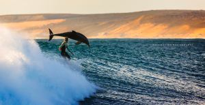 surfing-with-dolphins-at-jacques-point-kalbarri-western-australia-by-matt-hutton